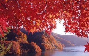 秋の行楽2