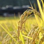 米の日は毎月8日! たまには米の日のことも思い出してあげてください