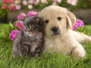 動物愛護週間2